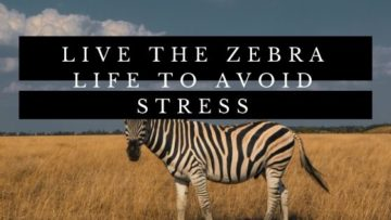 Live The Zebra Life To Avoid Stress
